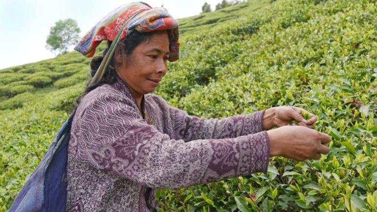 Alles rund um Fair Trade mit GEPA